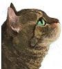 El gato que buscaba un nombre